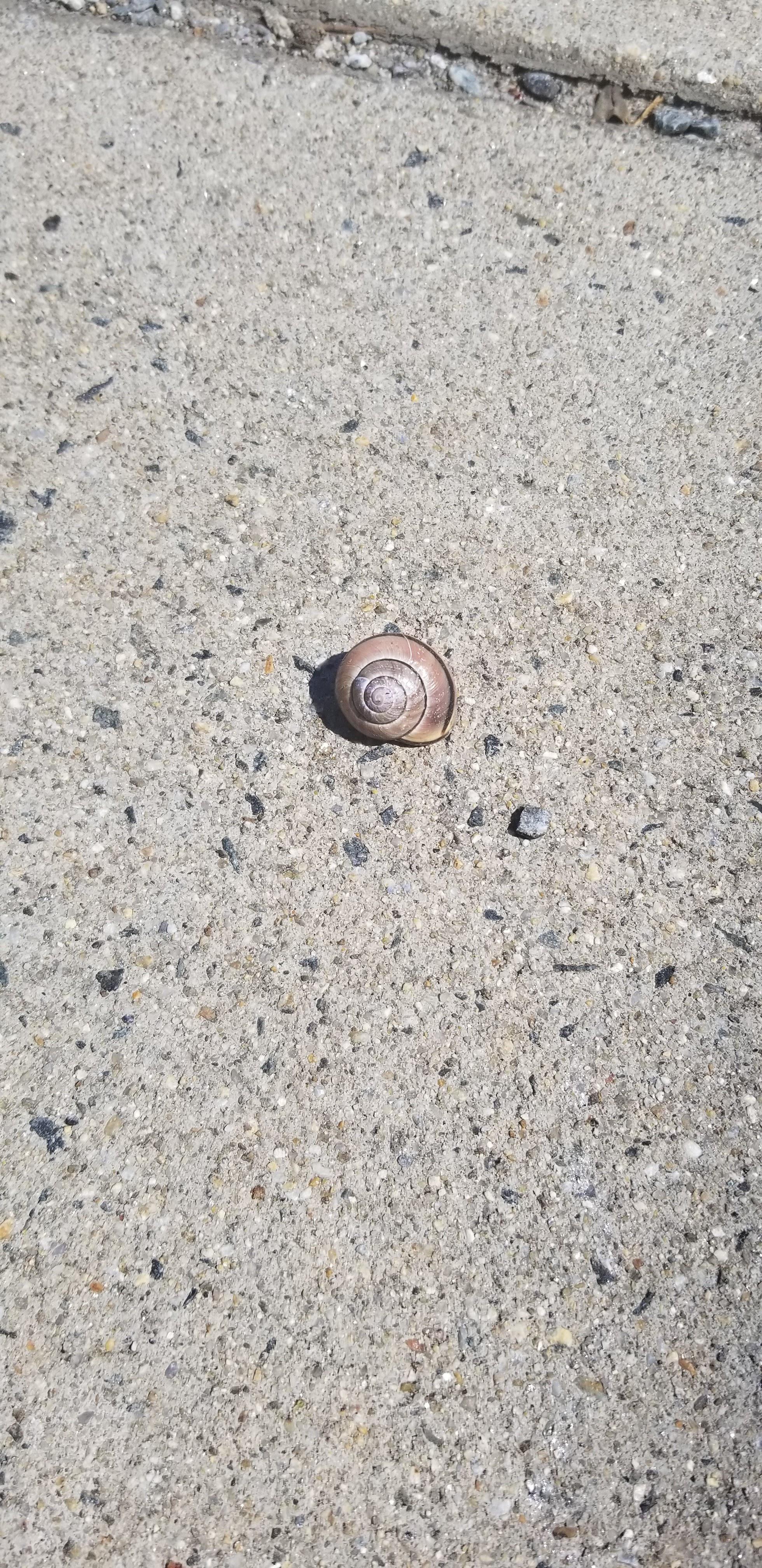 Snail sidewalk